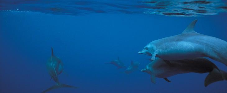 Nager avec les dauphins en Méditerranée