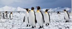 Voyage et expédition en péninsule Antarctique (12j)