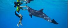 Nager avec les dauphins à Dubaï