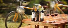 Excursion œnologique à vélo dans les vignes de Saint-Emilion