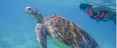 Nager avec les tortues sauvages d'Akumal