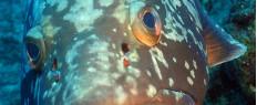 Baptême de plongée Banyuls sur mer