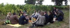 Dégustation de vins et visite guidée de vignes à Angers, Maine et Loire