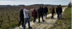 Dégustation de vins et visite guidée de vignes à Saumur, Maine et Loire