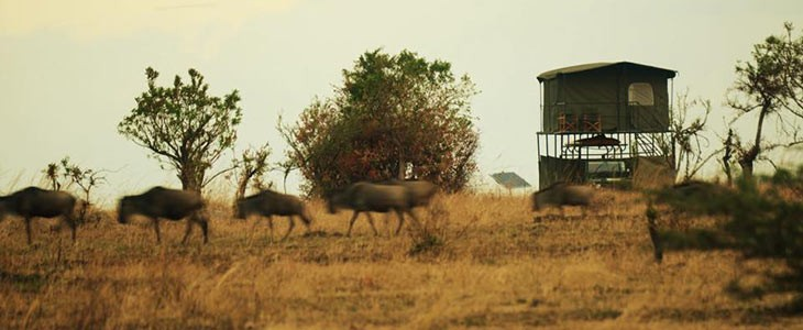 Safari glamping luxe en Tanzanie