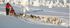 Randonnée chiens de traineaux en Laponie, Finlande