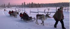Balade en traineau à renne en Laponie, Finlande