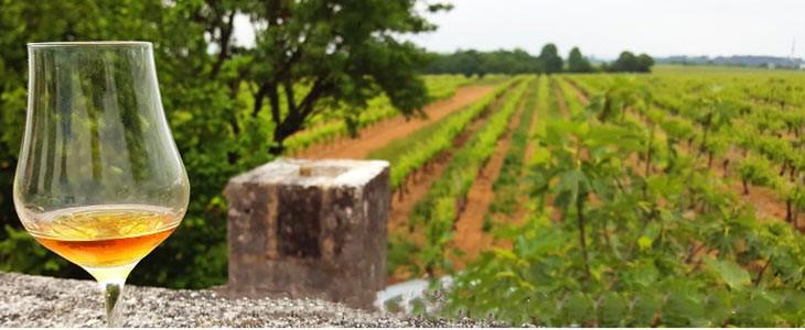 Atelier de dégustation de Cognac en Charente