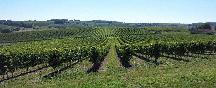 Visite privative du vignoble de Cognac avec guide