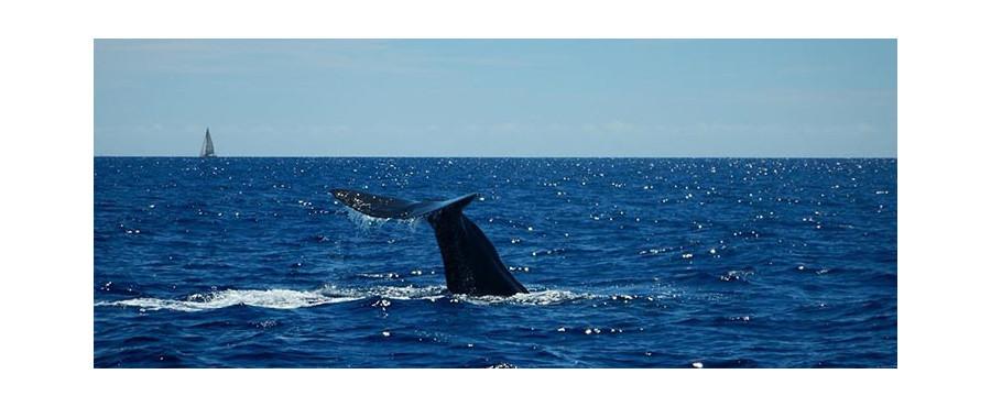 Nager avec les dauphins en m diterran e for Nager avec les dauphins nice