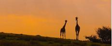 Week-end safari en Angleterre