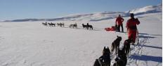 Randonnée chiens de traîneaux Plateau de l'Aubrac