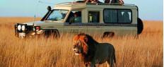 Safari Big Five 1 journée, Le Cap, Afrique du Sud