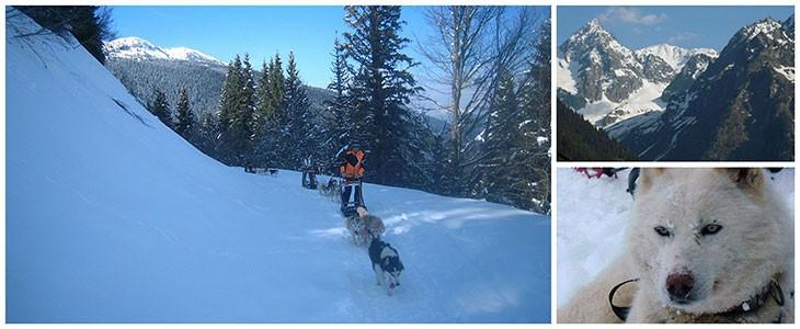 Randonnée chiens de traîneaux Grenoble Belledonne Isère