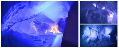 Week-end insolite en igloo Val Thorens Les 3 Vallées