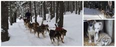 Randonnée chiens de traîneaux Andorre Pyrénées