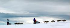 Randonnée d'une journée en chiens de traineaux en Savoie