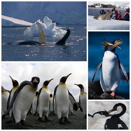 animaux antarctique