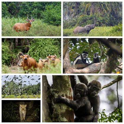 voyage safari congo